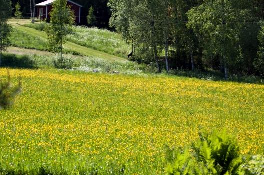 Björkborn jpgForsen-178