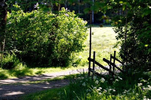 Björkborn jpgForsen-227